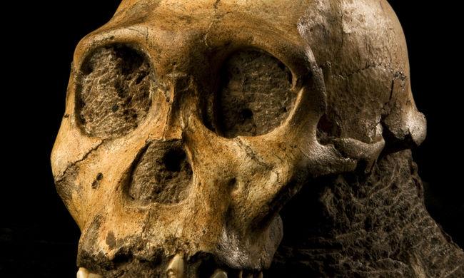 Megkérdőjeleződött az evolúció hagyományos elmélete: egy 9 éves kisfiú felfedezése dönthet meg mindent