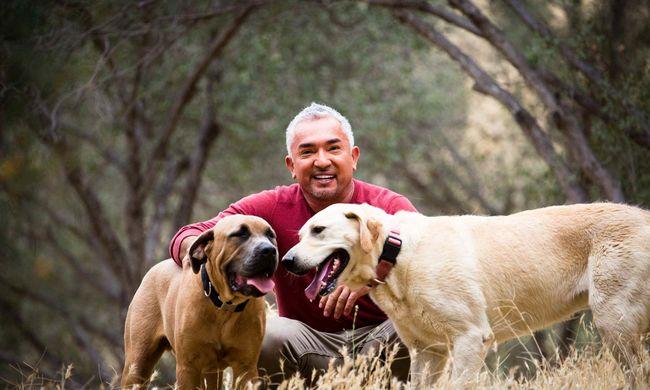 Különleges előadással tér vissza hazánkba a világhírű kutyapszichológus