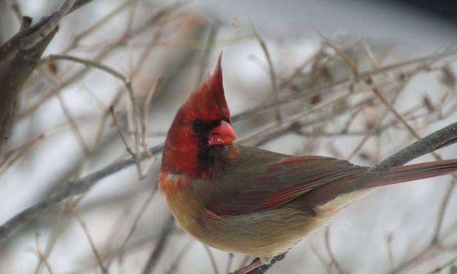 Ritka madár bukkant fel a házaspár kertjében, ezt mondják a szakértők a hímnős állatról
