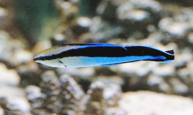Okosabbak, mint hittük: meglepő dolog derült ki a halakról