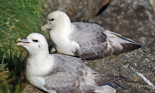 Döbbenetes, mire bukkantak ezeknek a madaraknak a tojásaiban