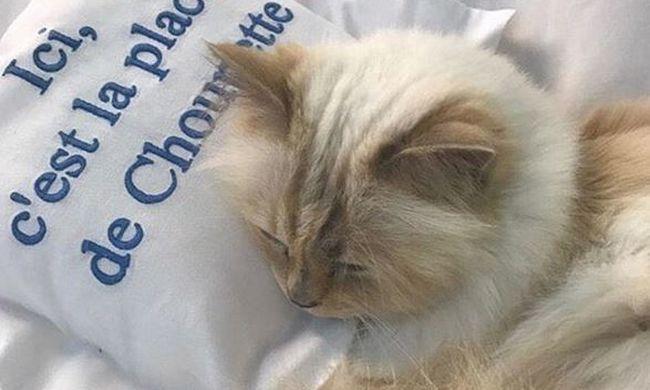 Fényűző életet él, ő lehet a földkerekség leggazdagabb macskája