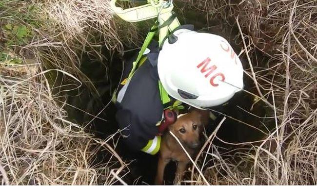 Megható videó, kútból mentettek ki egy kutyust a tűzoltók