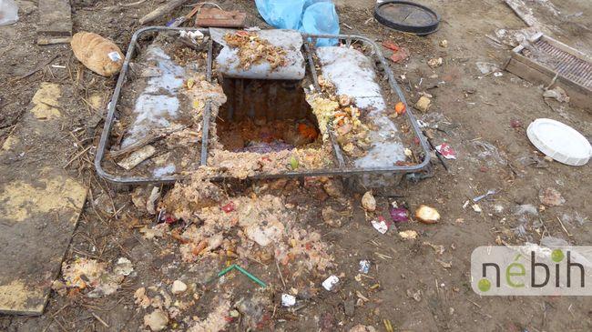 Undorító állapotok: illegális sertéstelepre bukkantak Pest megyében