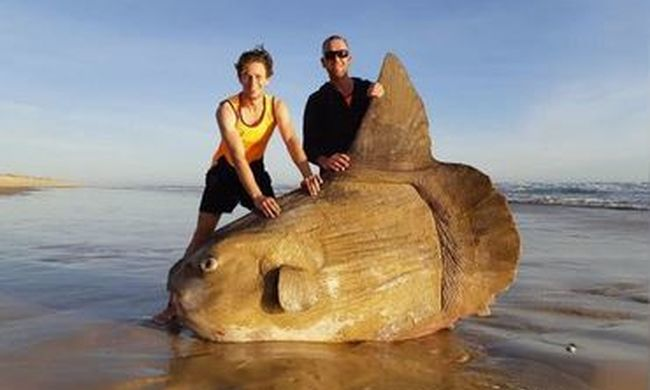 Elképesztő látvány, gigantikus halat mosott partra a víz