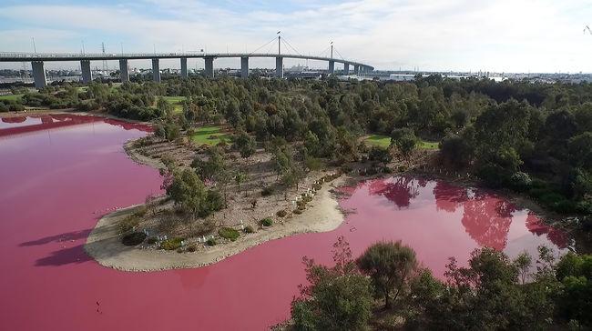 Elképesztő látvány: rózsaszín lett a tó vize, de nem mérgezéstől - fotó