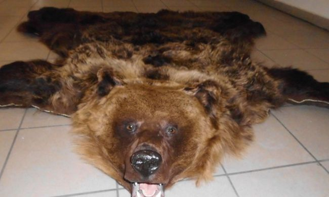A pénzügyőrök is elképedtek, medve került elő a csomagtartóból a magyar határon