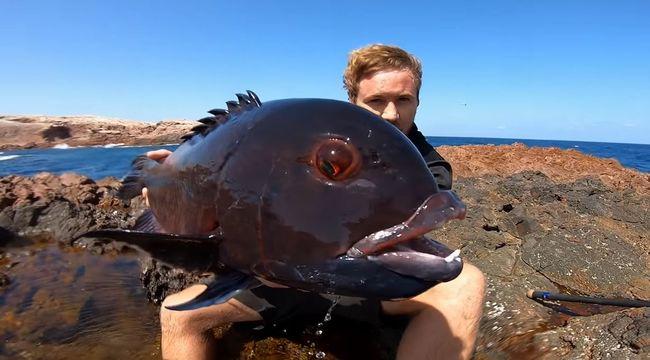 Elképesztő videó, így még egyetlen példányt sem fogtak ki ebből a rémisztő halból