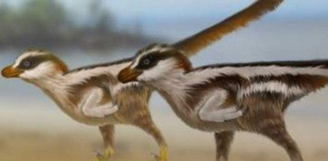 Ilyet még senki sem talált a világon, különleges dinoszaurusz nyomok kerültek elő