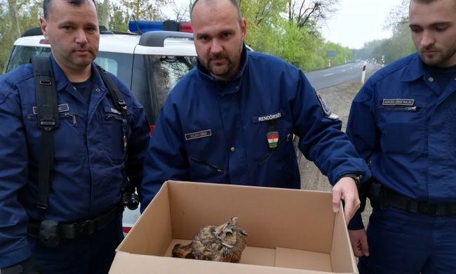 Szívmelengető, amit a hercegszántói rendőrök tettek reggel - fotó a megmentett állatról