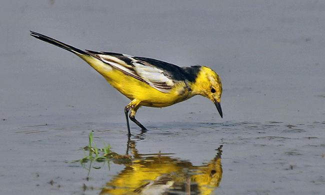 Már több mint tíz éve nem történt ilyen a Bükkben: gyönyörű madarat fotóztak