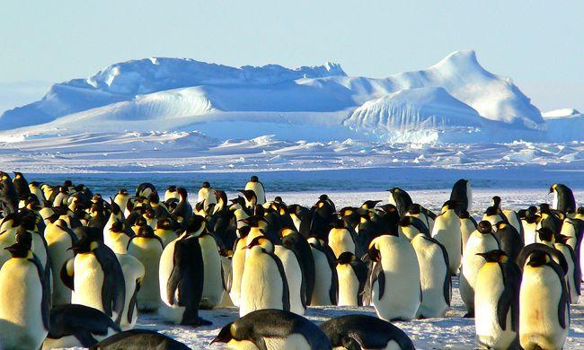 Percek alatt nyelte el őket a mélység: több ezer pingvinfióka fulladt az óceánba